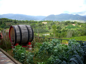 Italy: Winery outside of Florence